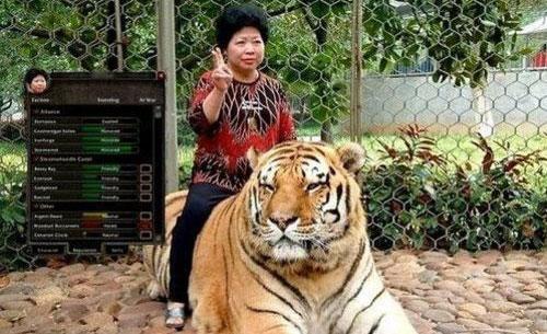 魔兽世界白色老虎宝宝