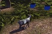 模拟山羊-新版娱乐视频解说