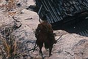 《只狼:影逝二度》佛珠+種子+寶鱗+義手武器道具+商人收集位置